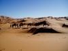 Desert de Merzouga